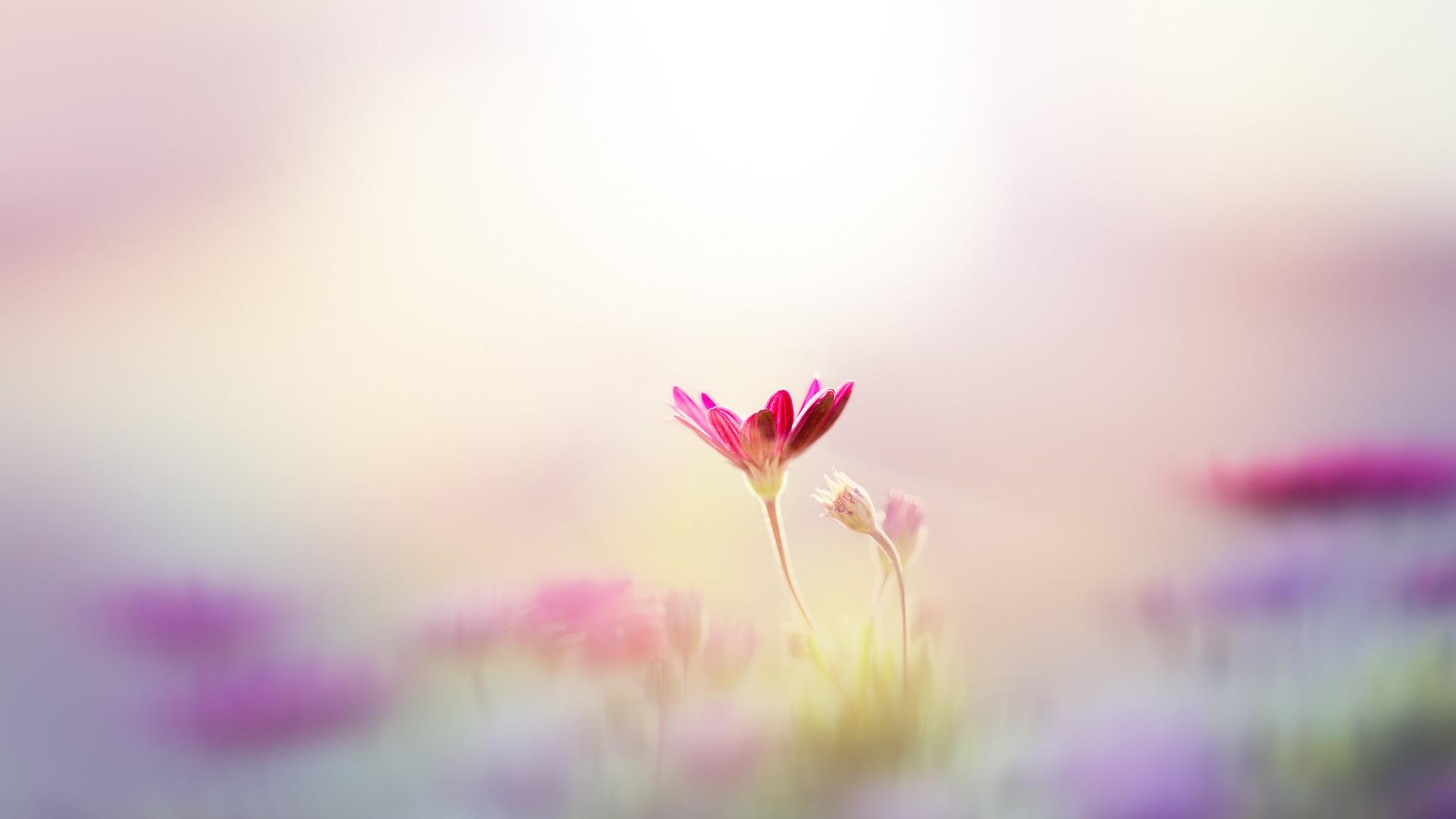 情在芬芳,犹如花香